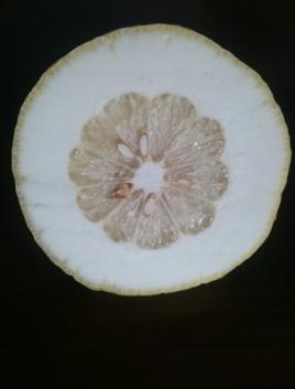 Aufgeschnittene Cedra