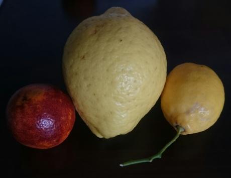 Zitrusfrüchte.jpg